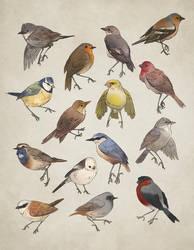 Birds by norapotwora