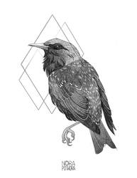 [C] Starling