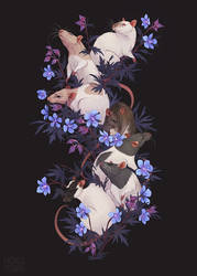 [C] Rats
