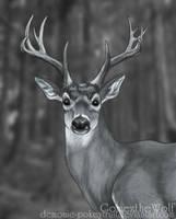 Deer Portrait by Demonic-Pokeyfruit