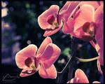 Pink Dreams by IHaveSeenTheRain