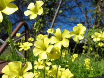 Springtime in Santa Cruz by marisol