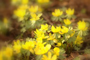 blured flowers