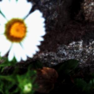 Silissin's Profile Picture