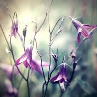 bellflowers by StargazerLZ