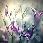 bellflowers