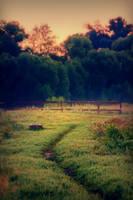 Sunrise path by StargazerLZ
