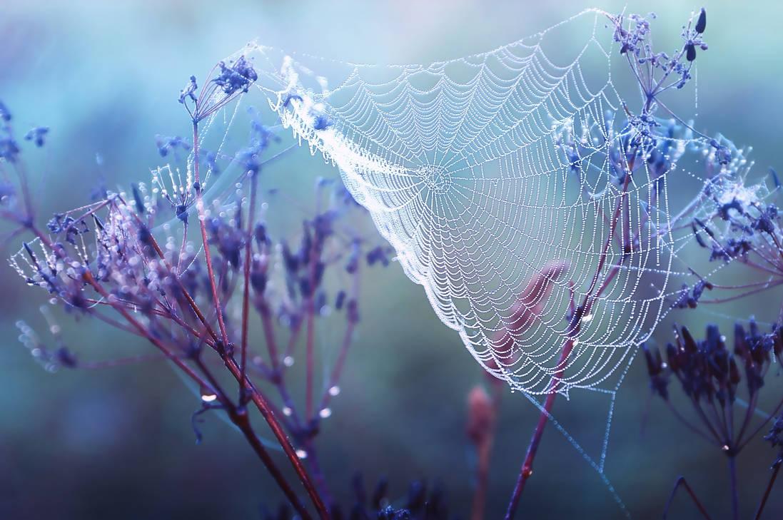Dewy web by StargazerLZ