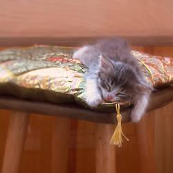 sweety sleeps ii by StargazerLZ