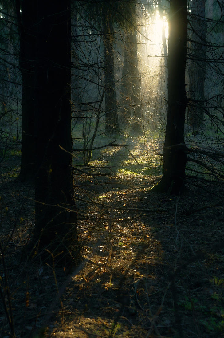 sunrising forest 1 by StargazerLZ