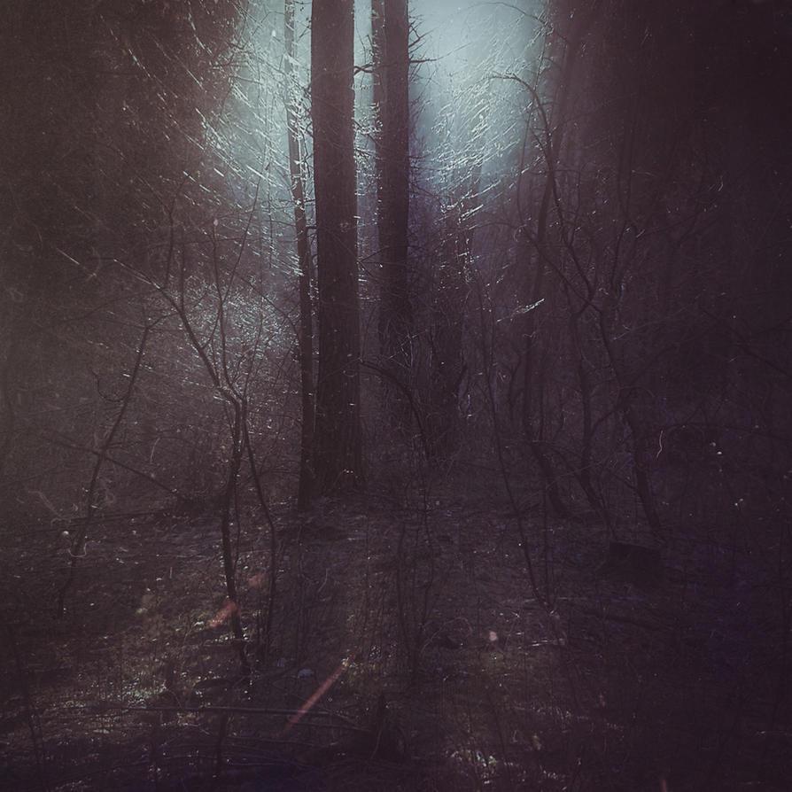 forest by StargazerLZ