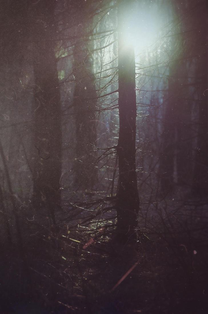 forest i by StargazerLZ