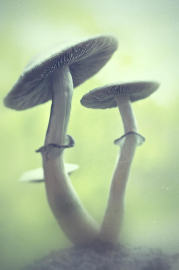 shrooms by StargazerLZ