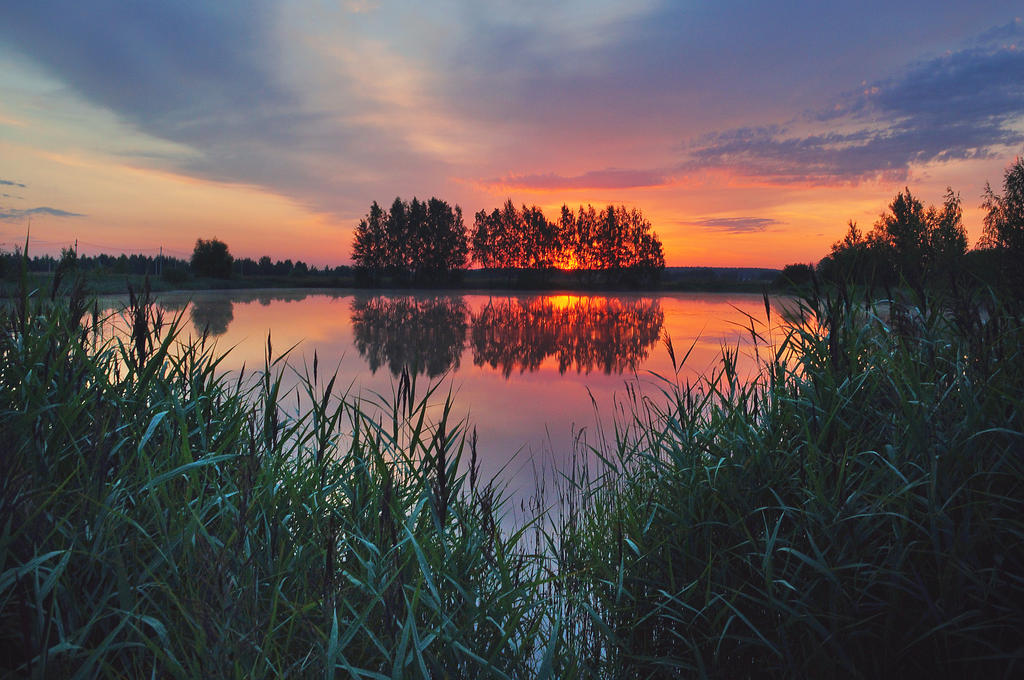 a morning in reeds by StargazerLZ