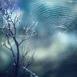 a web by StargazerLZ