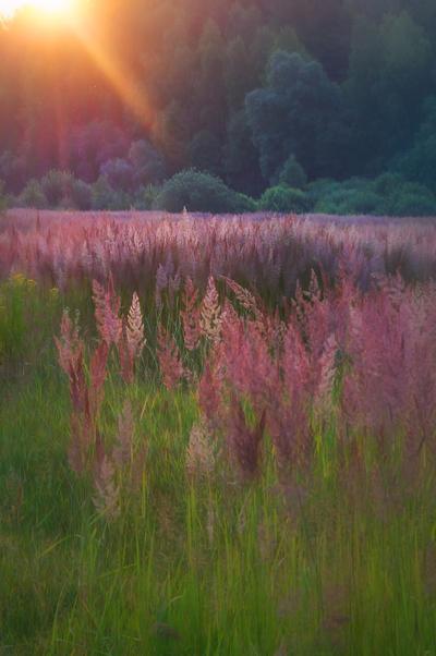 a field by StargazerLZ