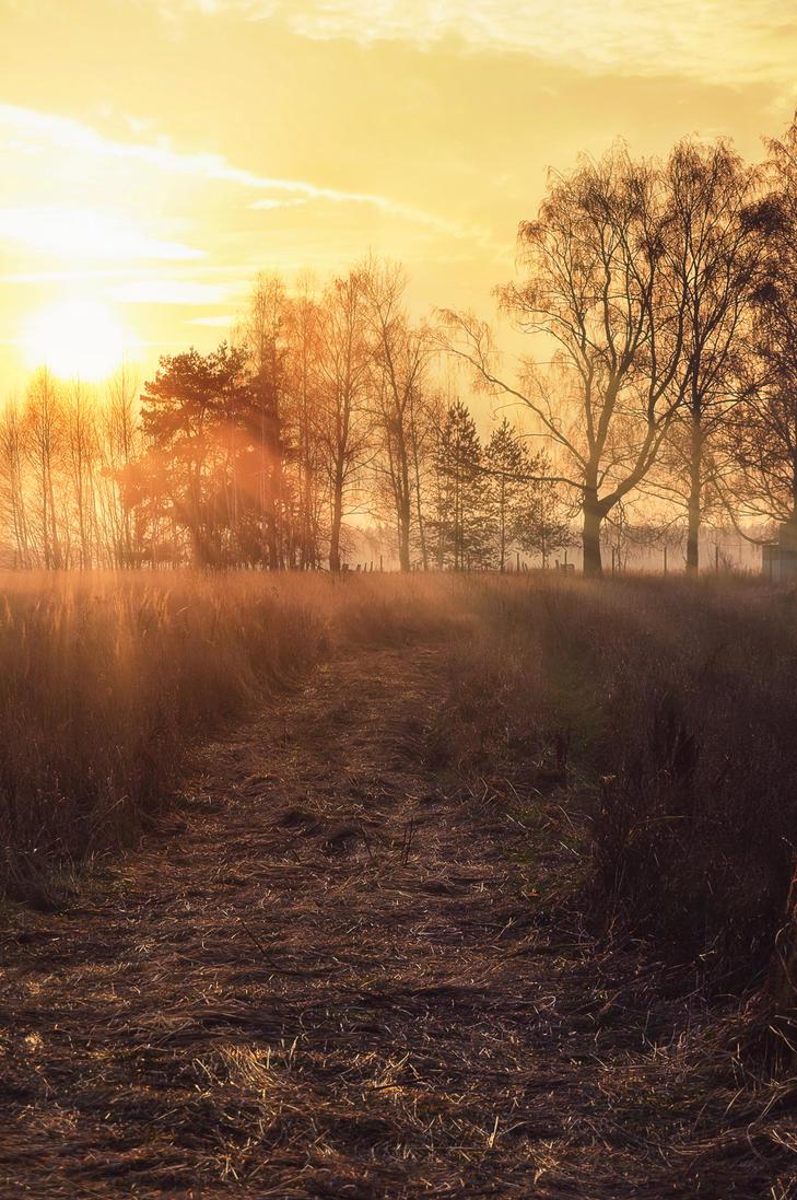 through the trees by StargazerLZ