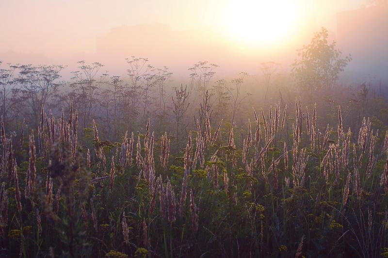 autumn morning fog by StargazerLZ