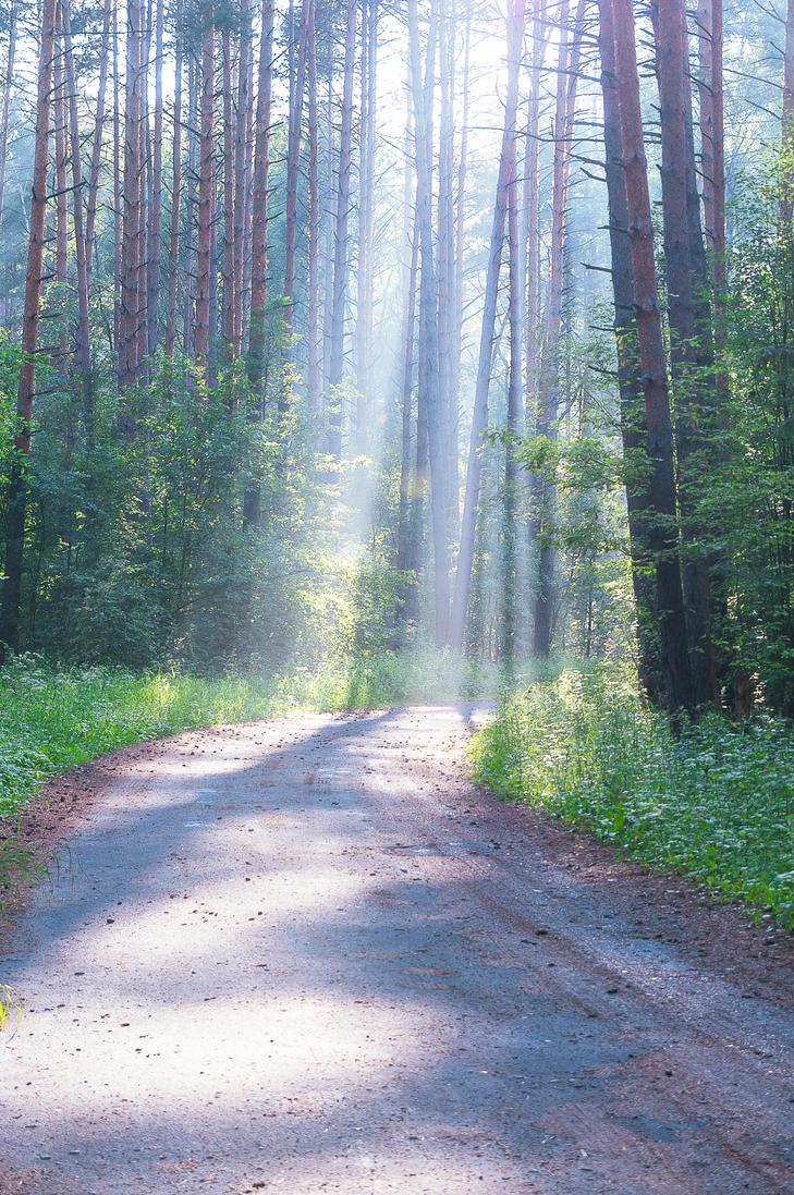 Sunrise foggy forest ii by StargazerLZ