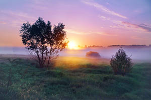 summer morning by StargazerLZ