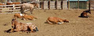 Lots o horses