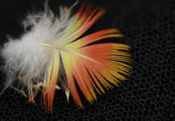 Lorikeet Feather by szekley