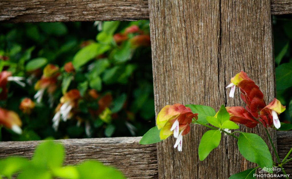 Wayside garden by szekley