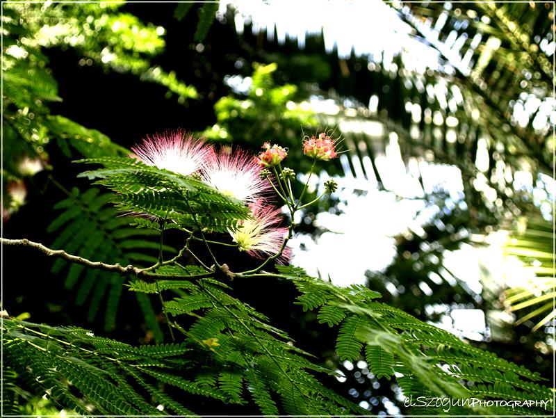 Flower _1