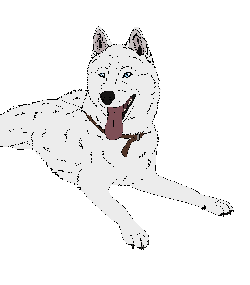 Line Art Dog : Husky puppy lineart imgkid the image kid has it