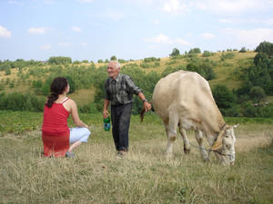 old man and old cow in romania