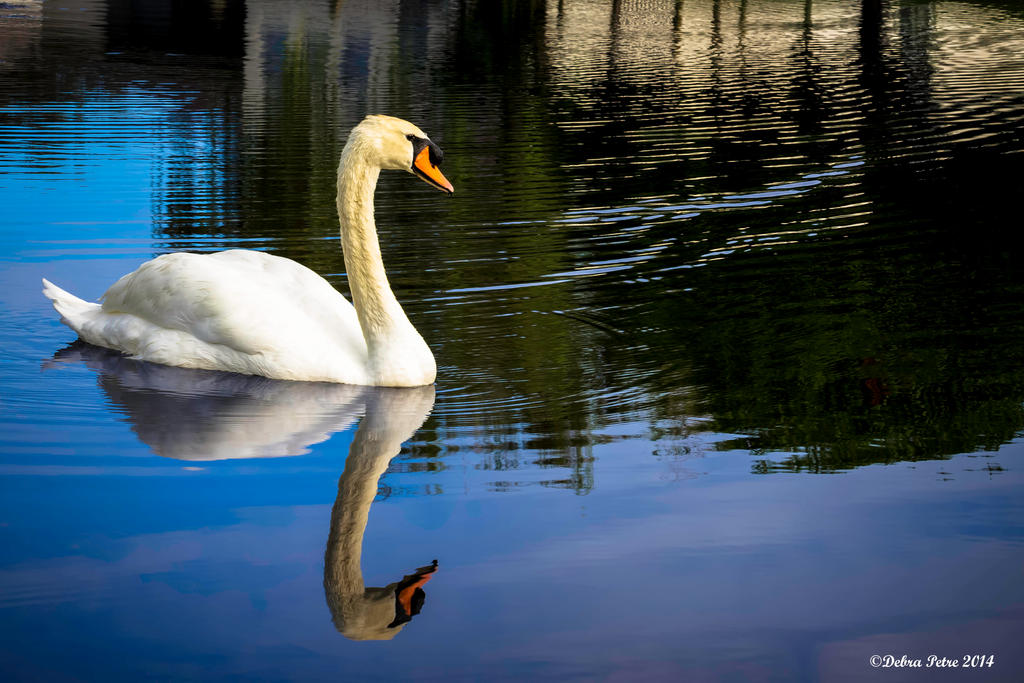 Swan by BettyBoopRox