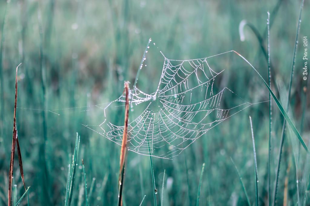 Beaded Spiderweb by BettyBoopRox