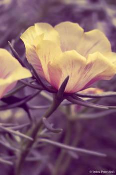 Toned Flower