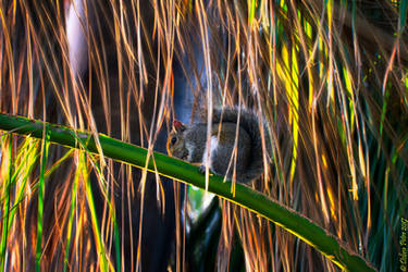 Abounding Fronds Encompass the Squirrel