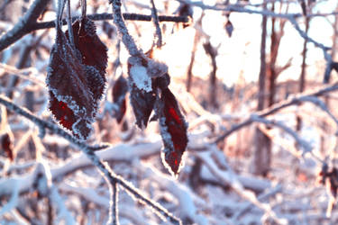 Hoar Frost - Anchorage, Alaska by Life-Flux