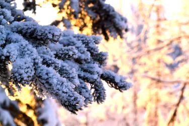 Hoar Frost 2 by Life-Flux