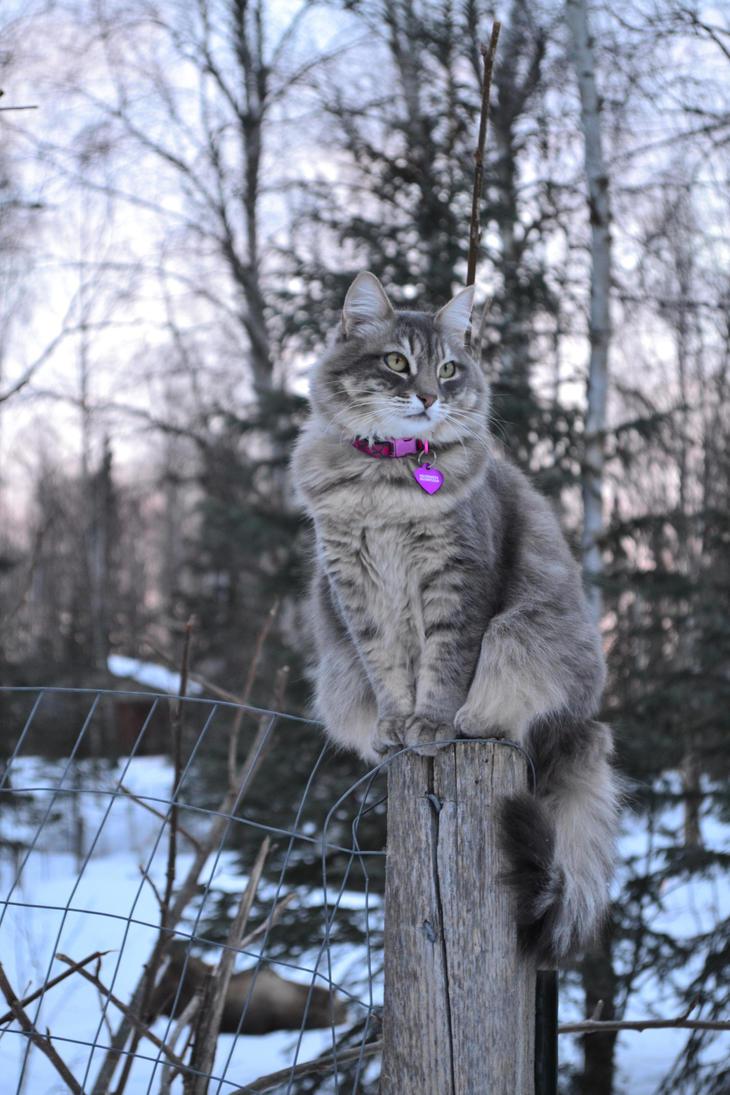 Hazey on Moose watch. by Life-Flux