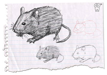 Sketch136 (mouse)