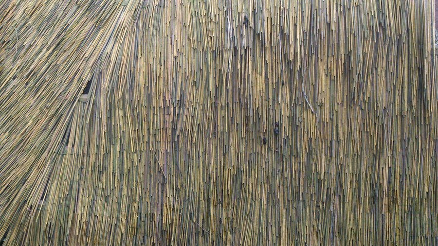 Texture bamboo by Bluefishweb