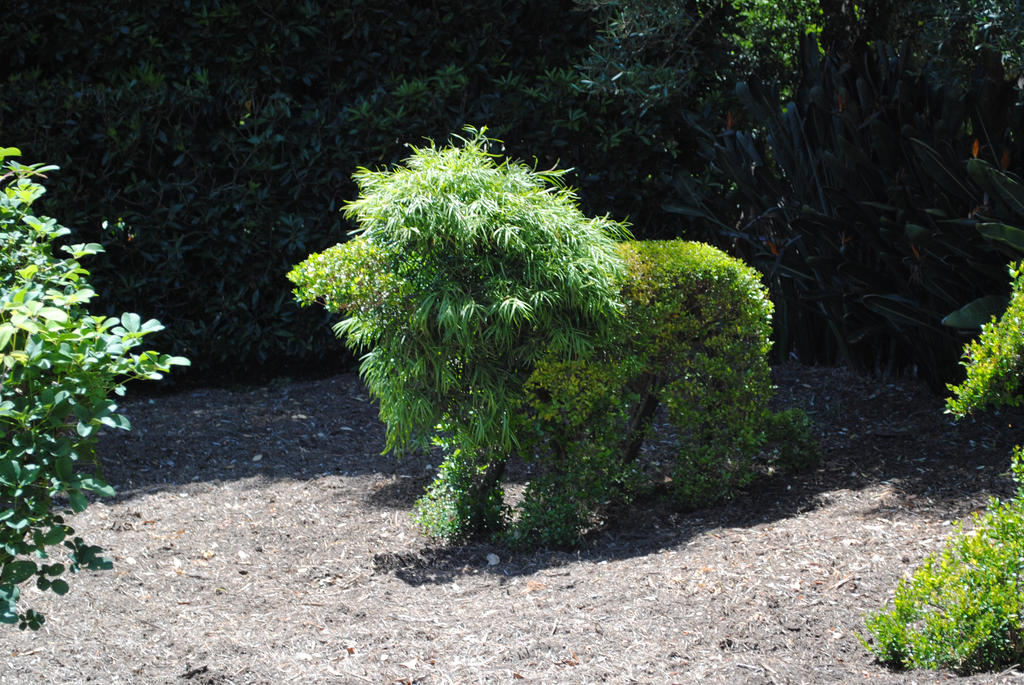 lion topiary Gallery