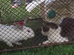 when wabbit meets putty cat
