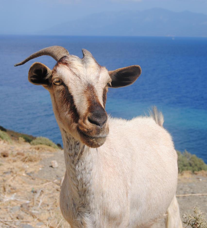 Greek goat by marcojo Troy Bolton Porn Tube. Troy Bolton Porn Tube. It was a true eight inches, ...