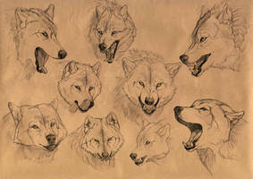 The wolf emotions