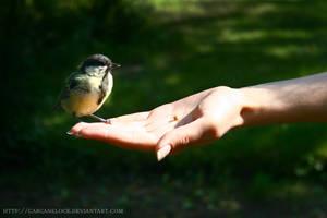 Birdfeeding by Carcaneloce