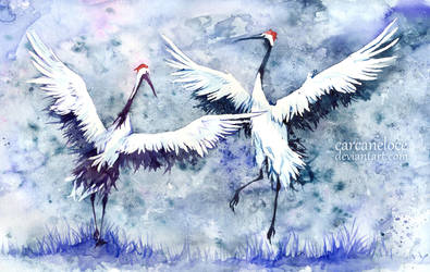 Red-crowned Cranes - Dance