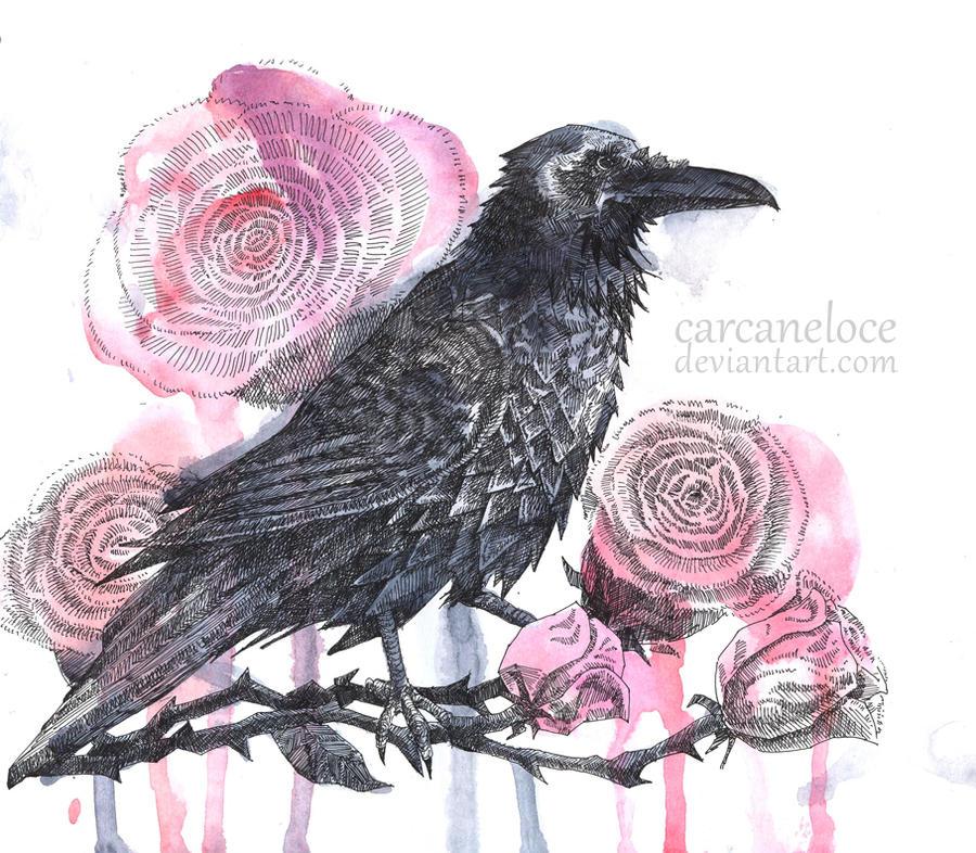 http://fc06.deviantart.net/fs70/i/2011/167/3/6/black_raven__red_roses_by_carcaneloce-d3j2tsc.jpg