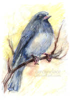 Junco for Lucasusual by Carcaneloce