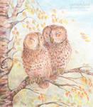 tAWWWWny Owls