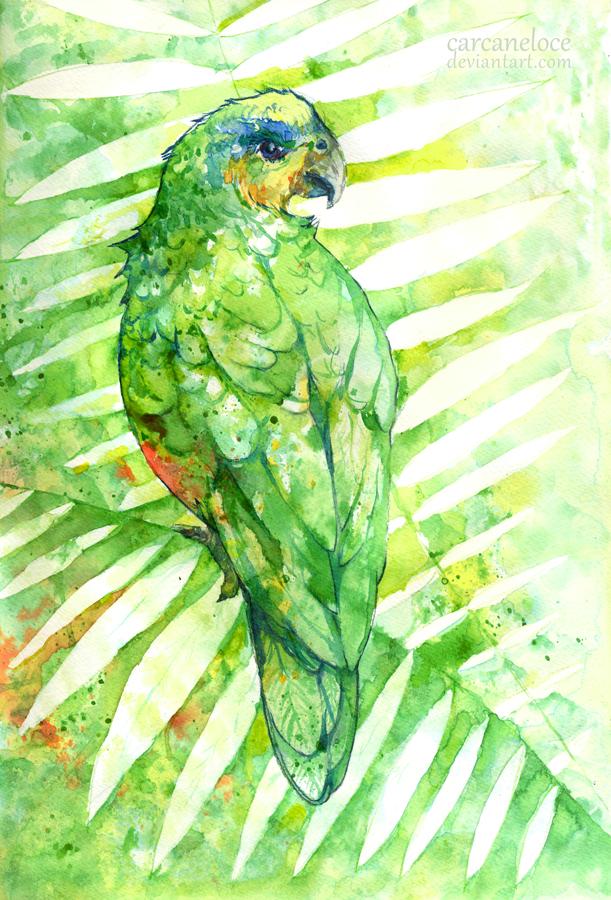 PRIZE: Amazona Amazonica by Carcaneloce