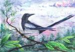 Evening Magpie
